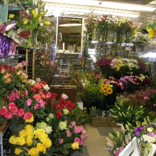 About hummingbird floral shoreview mn florist hummingbird floral has been proudly serving north oaks and the surrounding area since 1991 under new local ownership since 2010 the shop has expanded its mightylinksfo Images