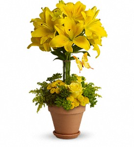 Yellow Fellow in Worcester MA, Herbert Berg Florist, Inc.