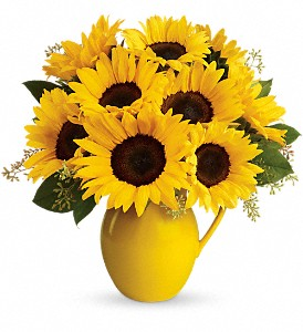 Teleflora's Sunny Day Pitcher of Sunflowers in Greensboro NC, Botanica Flowers and Gifts