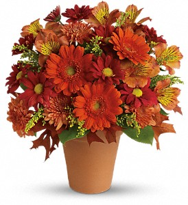 Golden Glow in Somerset MA, Pomfret Florists