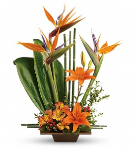 Teleflora's Exotic Grace in Chicago IL, Wall's Flower Shop, Inc.