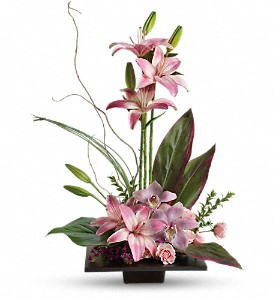 Imagination Blooms with Cymbidium Orchids in Reseda CA, Valley Flowers
