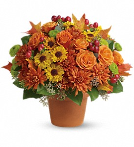 Sugar Maples in Naples FL, Naples Floral Design