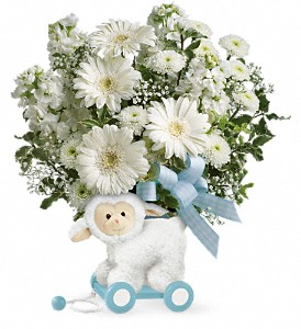 Teleflora's Sweet Little Lamb - Baby Blue in Amherst NY, The Trillium's Courtyard Florist
