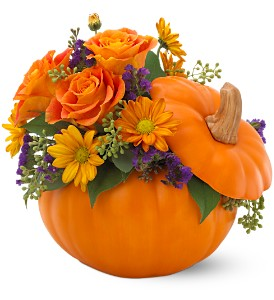 Teleflora's Pumpkin Patch Bouquet in East Providence RI, Carousel of Flowers & Gifts