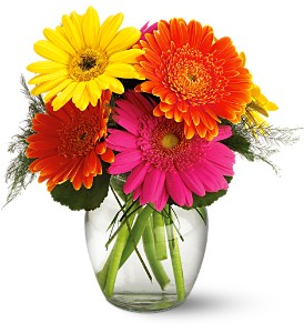 Teleflora's Fiesta Gerbera Vase in New Paltz NY, The Colonial Flower Shop