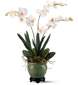 Orchids Forever by Teleflora in Gaithersburg MD, Flowers World Wide Floral Designs Magellans