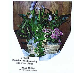 basket of mixed blooming and green plants in Sioux Falls SD, Country Garden Flower-N-Gift