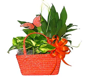 GP11 ''Orange Bliss'' Handbag Planter in Oklahoma City OK, Array of Flowers & Gifts