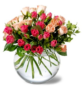 Teleflora's Crimson & Coral Roses in Fredonia NY, Fresh & Fancy Flowers & Gifts