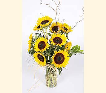One Dozen Sunflowers Arranged in Southampton PA, Domenic Graziano Flowers