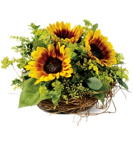 Nesting Sunflowers in Hendersonville TN, Brown's Florist