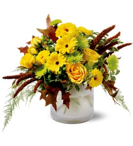 Harvest Sun in Rochester NY, Fabulous Flowers and Gifts