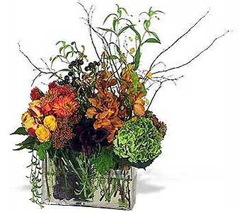 Autumn Garden In Los Angeles Ca Century City Flower Mart