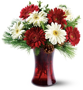 Festive Gerberas in Broomall PA, Leary's Florist