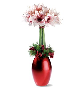 Amaryllis Bliss in New York NY, Fellan Florists Floral Galleria