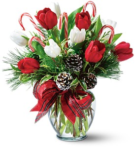 Peppermint Tulips in San Antonio TX, Allen's Flowers & Gifts