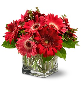 Teleflora's Gorgeous Gerberas in White Rock BC, Ashberry & Logan