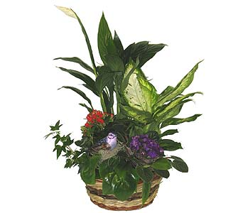 Bird Planter - 10 inch basket in Wyoming MI, Wyoming Stuyvesant Floral