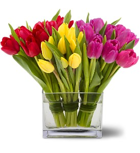Teleflora's Tulips Together in Detroit and St. Clair Shores MI, Conner Park Florist