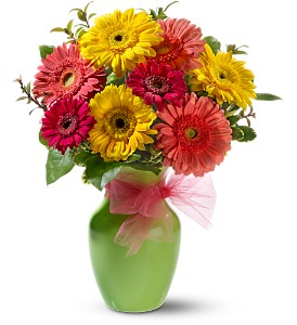 Daisy Dazzle in Fairfield CT, Town and Country Florist