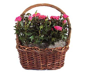 Rose Garden Basket in Cohasset MA, ExoticFlowers.biz