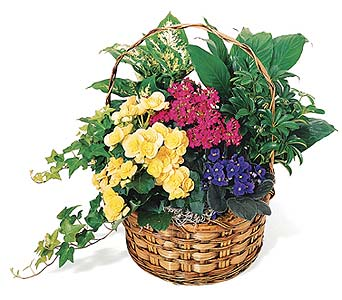 European Garden Basket in Big Rapids MI, Patterson's Flowers, Inc.
