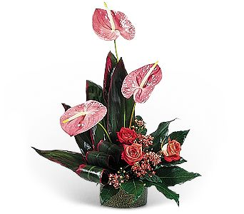 Hot Pink Anthuriums in Toledo OH, Myrtle Flowers & Gifts