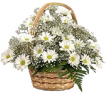 Fresh as a Daisy Basket in Canton PA, Stulls Flowers