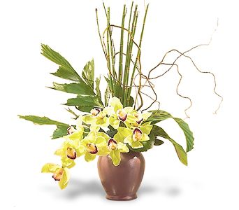 Glory of Green Orchids in Boca Raton FL, Boca Raton Florist