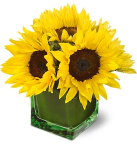 Teleflora's Modern Sunshine in West Nyack NY, West Nyack Florist