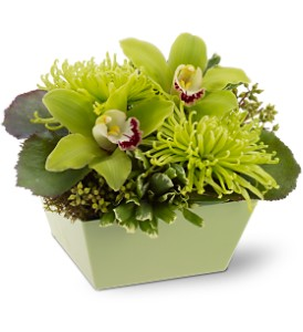 Go Green in Bellevue WA, Lawrence The Florist