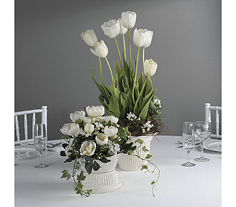 Tulip Arrangements in Abington MA, The Hutcheon's Flower Co, Inc.