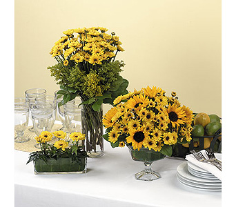 Viking Pompon Arrangements in Abington MA, The Hutcheon's Flower Co, Inc.