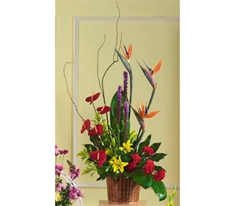 Birds of Paradise Basket in Rock Island IL, Colman Florist