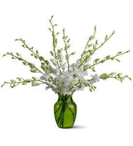 Serenity Orchids in New York NY, New York Best Florist