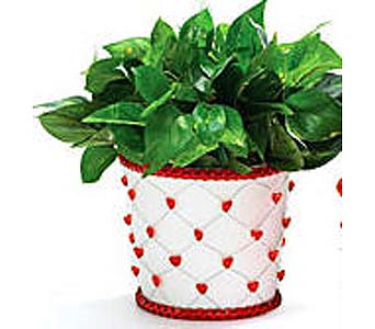 VGP60 ''Valentine's Ivy'' Green Plant in Oklahoma City OK, Array of Flowers & Gifts