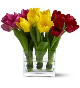Teleflora's Tulip Trio in Oakville ON, Oakville Florist Shop
