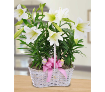 Double Easter Lilies in market basket in Abington MA, The Hutcheon's Flower Co, Inc.