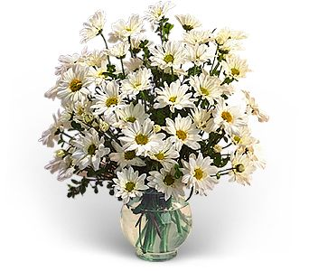 Delightful Daisies in Hilton NY, Justice Flower Shop