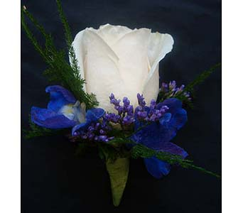 White Rose w/ Blue in Farmington CT, Haworth's Flowers & Gifts, LLC.
