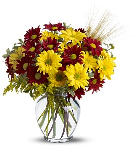 Fall for Daisies in Denton TX, Holly's Gardens and Florist