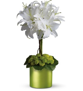 White Lily Topiary in Isanti MN, Elaine's Flowers & Gifts