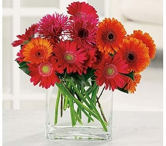 Charming Gerbera in Clovis CA, A Secret Garden