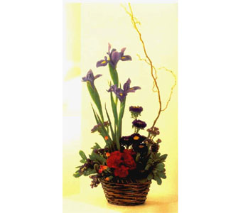 Iris Basket in Lake Forest CA, Cheers Floral Creations