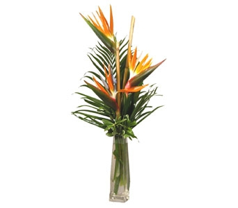 Bird of Paradise Trio in Stuart FL, Harbour Bay Florist