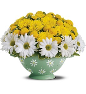 Teleflora's Daisy Colander Bouquet in Johnson City TN, Roddy's Flowers