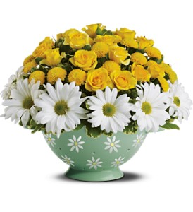 Daisy Colander Bouquet Deluxe in Grand Island NE, Roses For You!