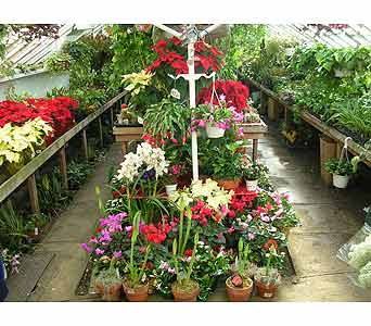 Tropical House Plants in Brooklyn NY, David Shannon Florist & Nursery