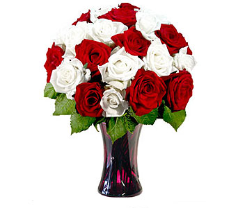 24 Red & White Roses in Pleasanton TX, Pleasanton Floral